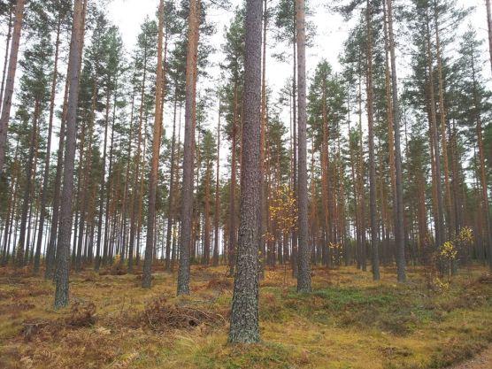 foresta casa