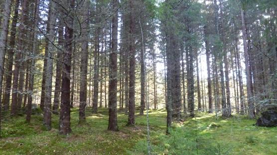Swedish woods