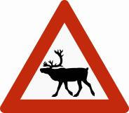 Pericolo renne in Norvegia