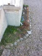 Fiori vichinghi primaverili nel giardino (a volte si va sotto lo 0!)