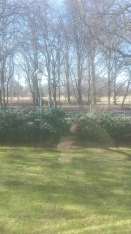La vista dalla finestra della cucina sul parco che piano piano inizia a diventare più verde. I bucaneve hanno già fatto la loro prima apparizione da qualche settimana :)